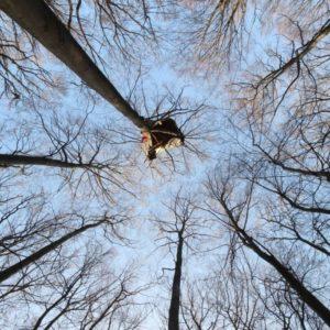 """""""Aktion Unterholz"""" unterstützen, gegen die Rodung des Hambacher Wald!"""